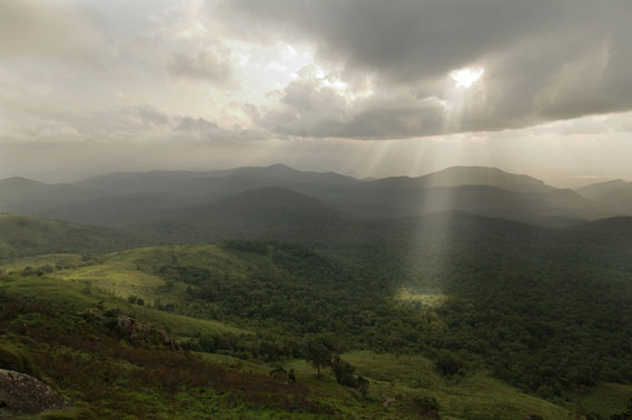 The forests of the Western Ghats.
