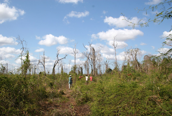 Forest in proximity to human settlements is often vastly degraded after fires, timber removal and introduction of nonnative plants. In these degraded areas biodiversity is reduced to insects and commensal species. Lemurs and fossas do not find suitable habitat here. Photo © Melanie Dammhahn.