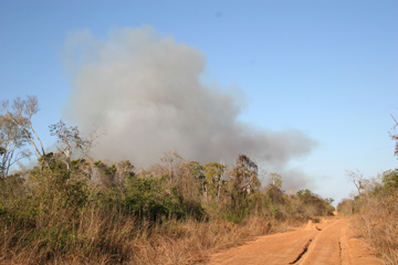 A common sight in Madagascar are columns of smoke marking myriads of fires on the island originating from destructive slash-and-burn-agriculture.  Photo © Melanie Dammhahn.