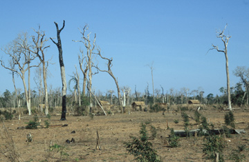 "A single small village with only a few huts can ""consume"" unimaginable areas of forest by burning concentrically from the village core. What remains is dead soil and dust. The poorest people in Madagascar cannot even afford a single tree for shade. Photo © Melanie Dammhahn."