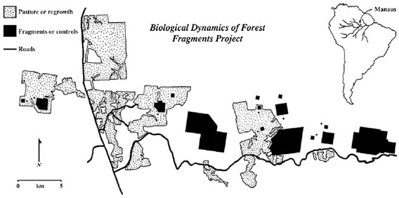 Map of the site of the The Biological Dynamics of Forest Fragments Project (BDFFP). Map courtesy of: W.F. Laurance et al. / Biological Conservation 144 (2011) 56–67.