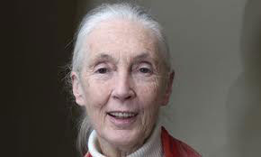 Dr. Jane Goodall. Photo courtesy of the Jane Goodall Institute.