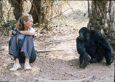 rencontres africaines jane goodall