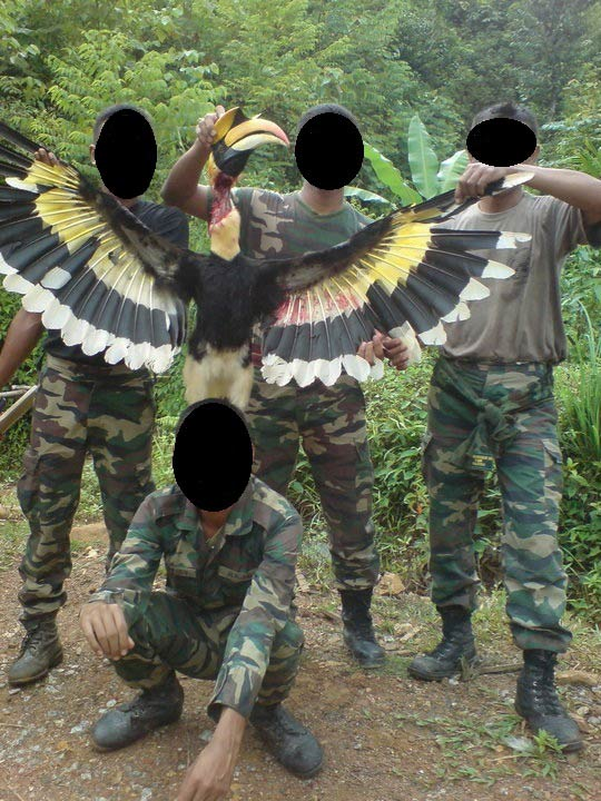 Photo in question: four men pose with slaughtered great pied hornbill.