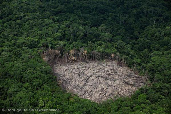 Deforestation in areas neighboring the pig iron cluster in Marabá, Pará state. Photo by: Rodrigo Baliea/Greenpeace.