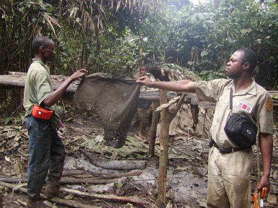 A wildlife inventory team came across this elephant poachers' camp in the forest where an ear of elephant was left on a drying rack. Photo by: John Hart.