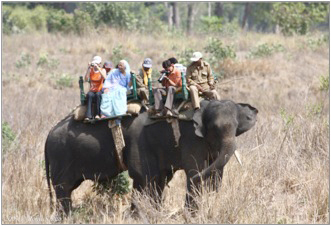 > Wildlife viewing by elephant is a common tourist experience in India. Photo by: Krithi Karanth.