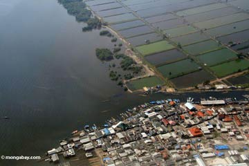 Aerial view of acquaculture—shrimp farms—in Java, Indonesia. Researchers say compounding impacts on the ocean are threatening to change it indefinitely.  Photo by: Rhett A. Butler.