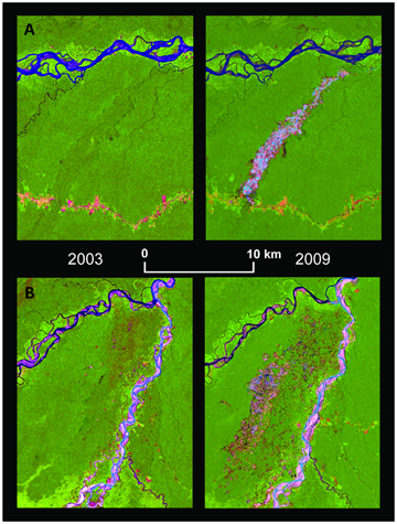 Rainforest felled for gold mining appears in these satellite images as a pink scar in the 2009 view. A) is Guacamayo (12°51′S, 70°00′W) along the Interoceanic highway (which is the red line) and (B) is Colorado-Puquiri (12°44′S, 70°32′W) in the buffer zone of the Amarakaeri Communal Reserve. Image from: Gold Mining in the Peruvian Amazon: Global Prices, Deforestation, and Mercury Imports.
