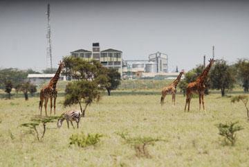 Giraffe and zebra next to industrial development. Photo by: Paula Kahumbu.