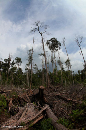 Forest destruction in Borneo. Photo by: Rhett A. Butler.