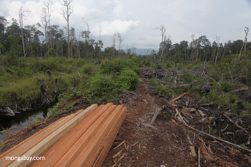 Illegally logged wood in Indonesian Borneo. Photo by: Rhett A. Butler.