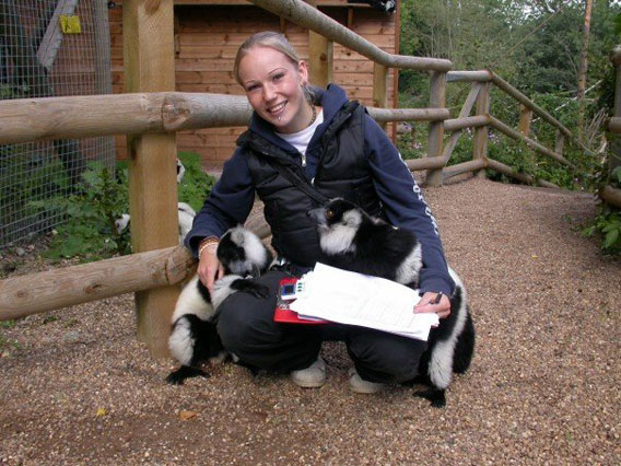 Kara Moses with the ruffed lemurs at Dudley Zoo, conducting undergraduate research