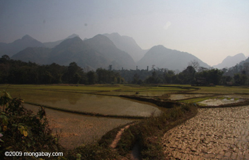 How will these rice fields in Laos do in an age of climate change. Photo by: Rhett A. Butler.