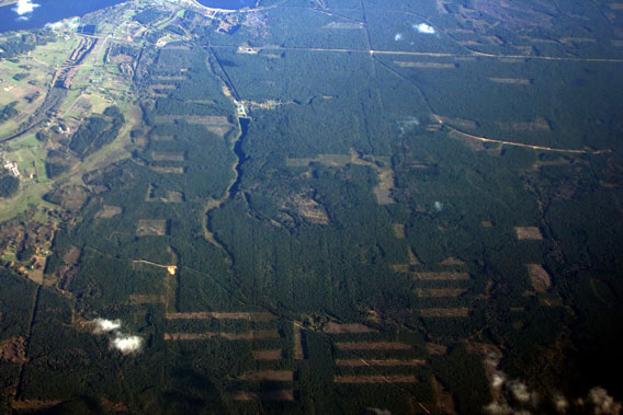 Aerial view over Latvian forests—please note almost all cutting patches are fresh, not yet regenerated. Photo by: R.Matrozis, 2007.