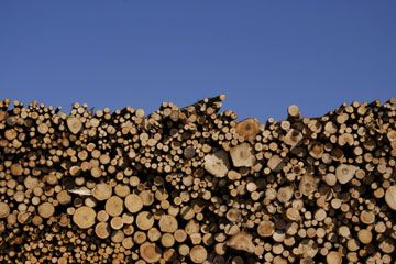 Latvian timber for customers overseas. Photo by: R. Matrozis, 2009.