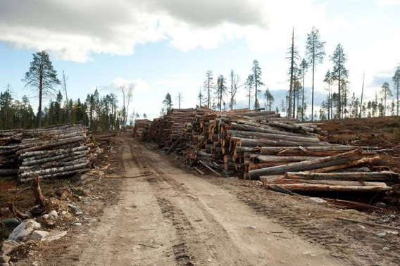 Destroyed old-growth forest with piles of timber on land leased by IKEA/Swedwood in Russian Karelia. Photo © Robert Svensson, Protect the Forest 2011.