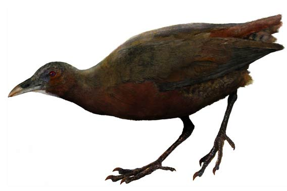 Artist's view of the Mentocrex beankaensis.  Illustration by: Velizar A. Simeonovski.