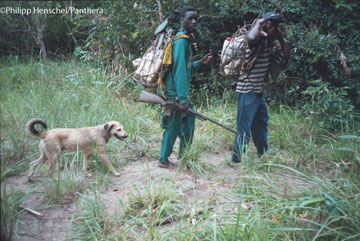 Bushmeat hunting with dog, photo taken by camera trap. Photo by: Philipp Henschel/Panthera.