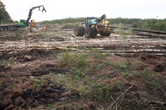 Logging projects and clear cuts in the Green Swamp, Southeastern North Carolina. Green Swamp—Brunswick County, North Carolina. Photo by: Dogwood Alliance.