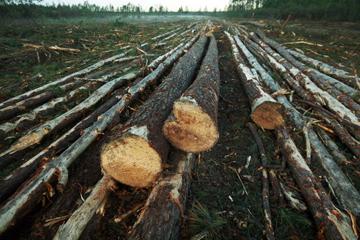 Green Swamp—Brunswick County, North Carolina. Photo by: Dogwood Alliance.