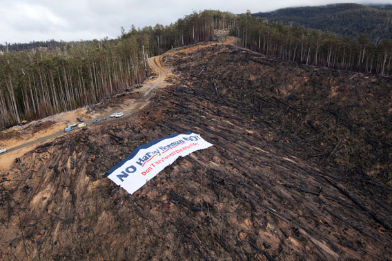 Banner at clear cut in Tasmania. Photo by: Rob Blakers.
