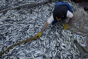 Sobre-pesca en el Mar de Patagonia. Foto por: Rev. Puerto.