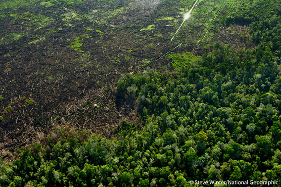 Palm oil plantations replacing rainforest. Photo by: Steve Winter/National Geographic.
