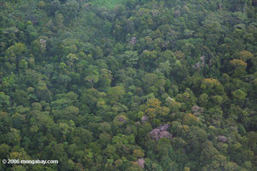 Rainforest canopy from the air in Panama. Photo by: Rhett A. Butler.