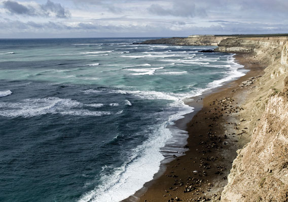 The coastline of the 'Patagonian Sea' covered with seabirds and seals. Photo by: W. Conway.