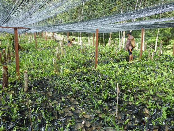 Reforestation nursery. Photo by: Gavin Bate.