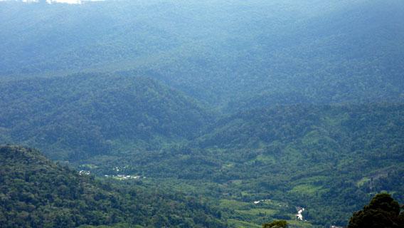Der von den Penan blockierte Regenwald. Foto mit freundlicher Genehmigung von Gavin Bate
