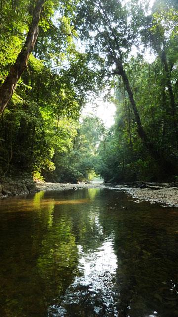 Penan rainforest.