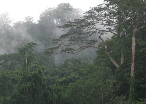 Tropical forest in Ghana, an irreplaceable habitat for many species. Photo courtesy of Ben Phalan.