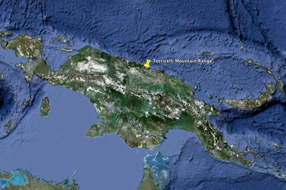 Les monts Torricelli sur l'île de Nouvelle-Guinée, habitat du marsupial arboricole tenkile, en danger d'extinction. Image fournie par Google Earth.