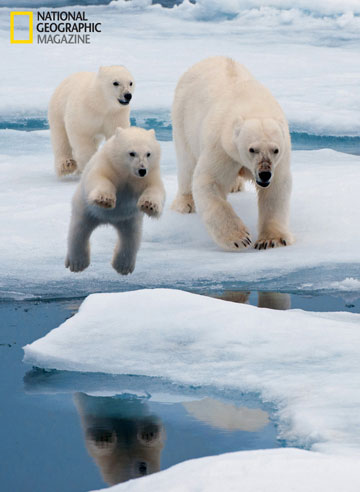 Polar bear family. © National Geographic Entertainment. Photo by: Florian Schulz.