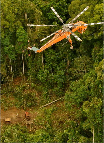 The Erickson air lift helicopter hovers above Puntung in her crate, moments before the lift. Photo by: © Dr Sen Nathan/Sabah Wildlife Department.