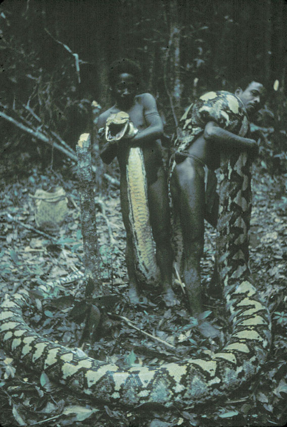 Giant snakes commonly attacked modern hunter gatherers in philippines