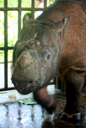 The Importance of Wild-Animal Suffering