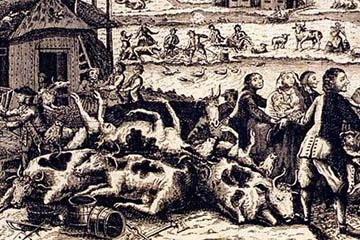 Detail of 18th Century image depicting a rinderpest outbreak in the Netherlands. Image by: Jacobus Eussen.