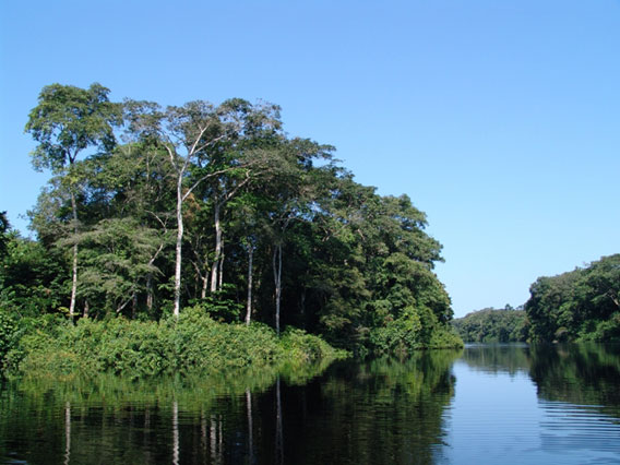 Forest and river in Salonga National Park. Photo by: Zoological Society of Milwaukee (ZSM).