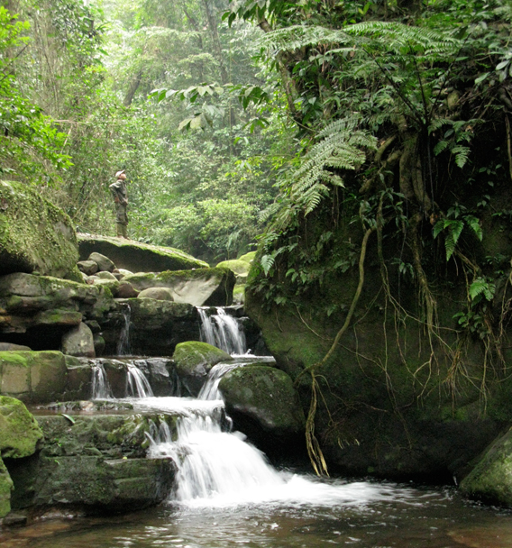 Stunning rainforest in the Annamite Mountains, home to the saola and other strange and little-known speicies. Photo courtesy of William Robichaud.