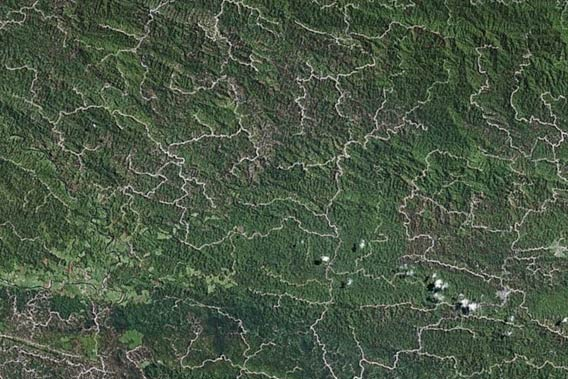 Logging roads criss-cross Sarawak's forests. Photo courtesy of Google Earth.