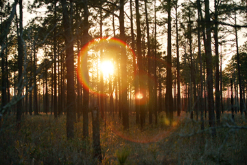 Green Swamp—Brunswick County, North Carolina. Photo by: Photo by: Dogwood Alliance.