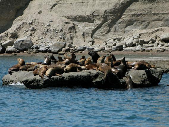 Rocas con leones marinos sudamericanos. Foto por: Victoria Zavattieri.