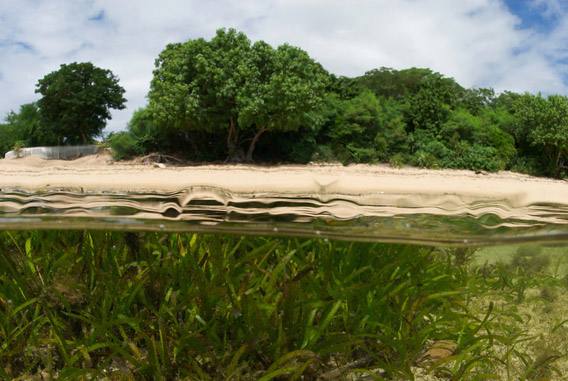 Mangroves above and seagrass below in Vohemar Bay, Madagascar. Photo: © Keith Ellenbogen/iLCP.