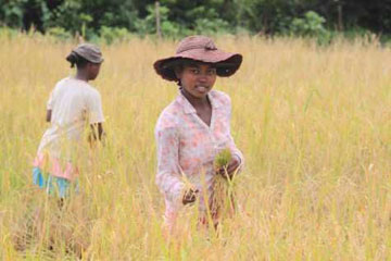 Malagasy woman working in the fields in the project area. Photo by: Tom Corcoran.