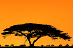 Activism: alternatives to the Serengeti road