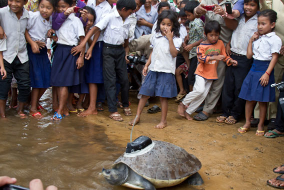 Children watch the rereleasing of a Southern River terrapin back into the wild. Photo by: Eleanor Briggs.