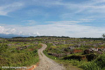 Once rainforest, now palm oil plantation: this monoculture plantation lies near Gunung Leuser National Park in Sumatra. Indonesia this year implemented a moratorium on new logging and plantation concessions with mixed results.